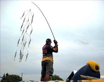 Saw someone casting an umbrella rig main forum surftalk for Alabama rig fishing
