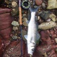 Colmisfishing
