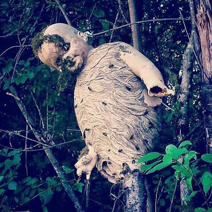 7-Wasps-build-nest-around-a-discarded-childs-doll.jpg