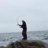 Fish365