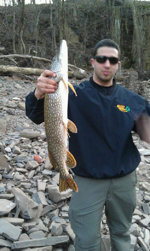 passaic river pike freshwater fishing surftalk