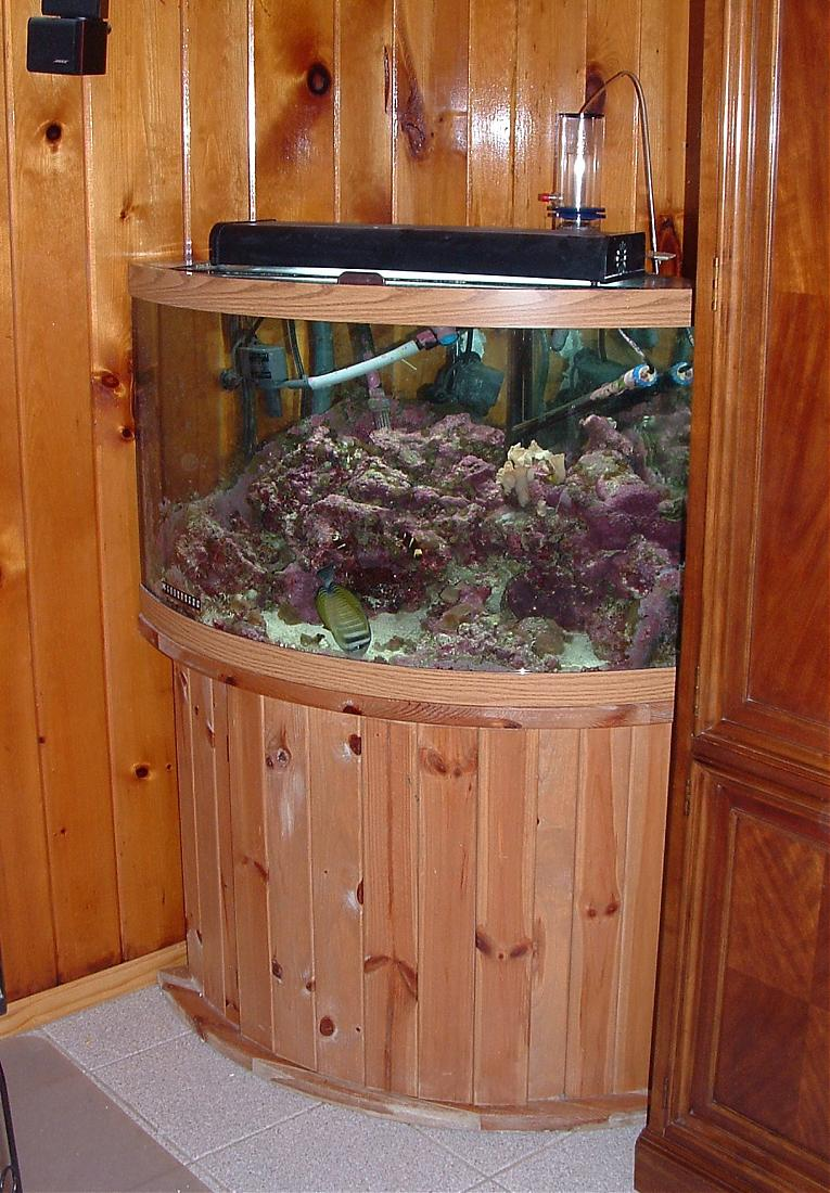 54 gallon bow front reef aquarium set up for sale for Bow front fish tank