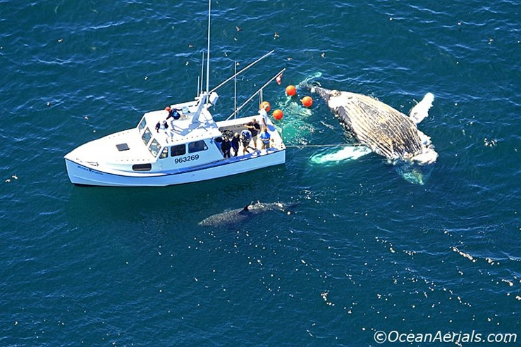 Was this the largest Great White ever caught? - Page 2 - Main Forum - SurfTalk