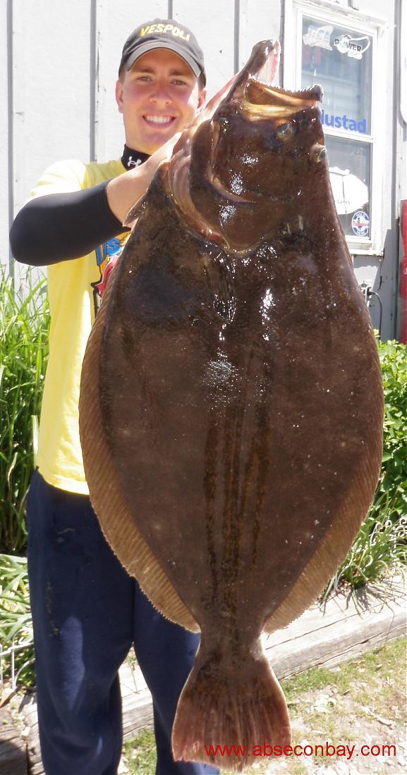 phillyfishing u0026 39 s flounder rig found