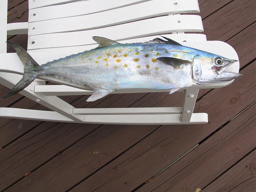 Where To Fish At Garden City Sc Main Forum Surftalk