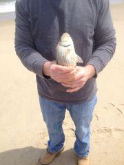 Delmarva Fishin' Reports - April 2014