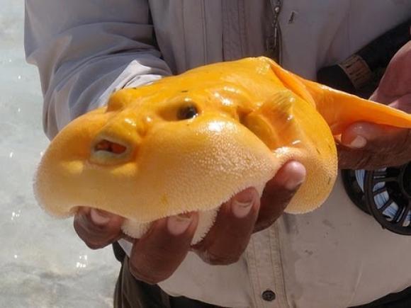yellowblogfish.jpg