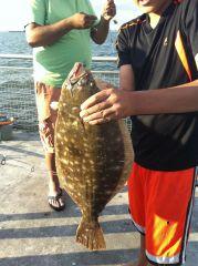 28 in fluke caught on mackerel  strips on  69 street pier in bay ridge Brooklyn New York
