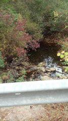 Trout stream pics