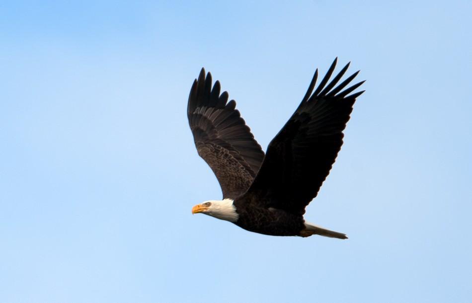 12-13-18 Eagles_015.jpg