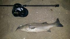 Fishing Reports in NJ, October 2014
