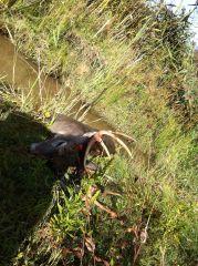 2014 Hunting Thread