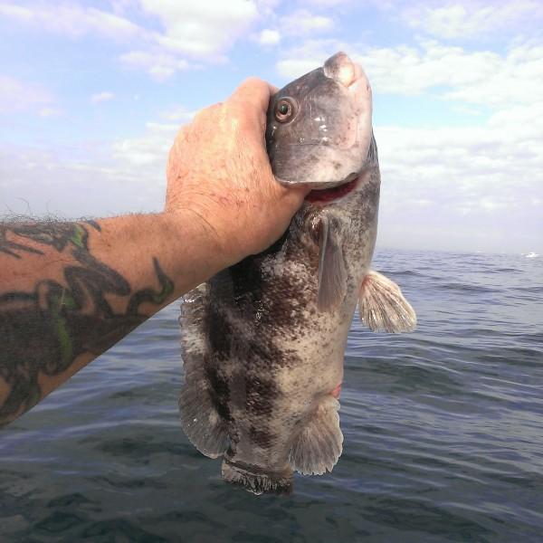 Bottom fishing reports: 2014