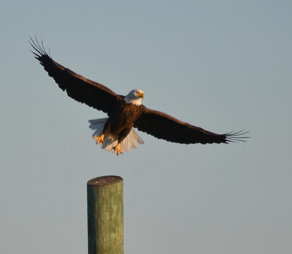 eaglesunset9945_zps1496557e.jpg