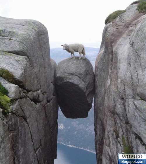 wm-dangerous-sheep.jpg