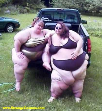 Fat-Chicks-726694.jpg