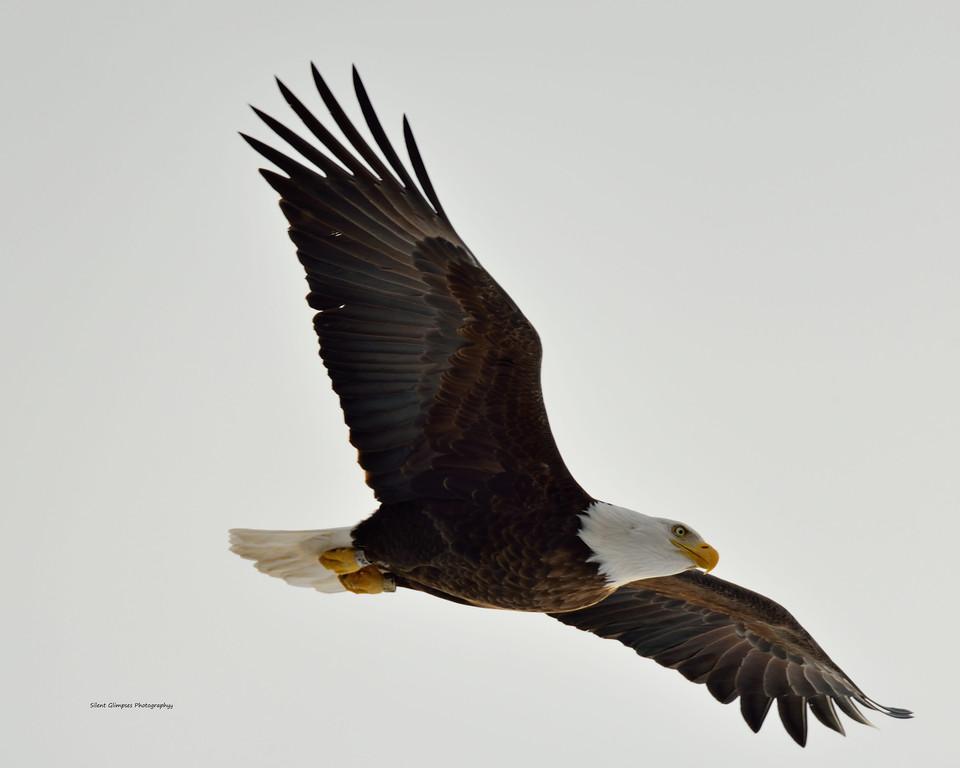 Eagle 2015 1.jpg