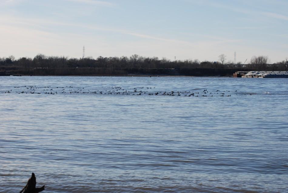 Bird Raft.jpg