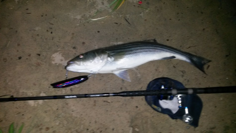 fishone.jpg