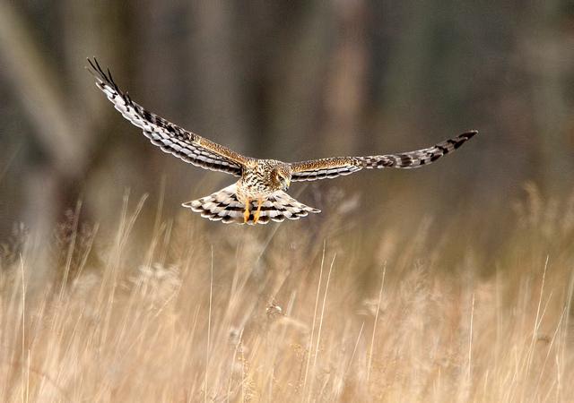 Shooting birds in flight (BIF) Manual settings.