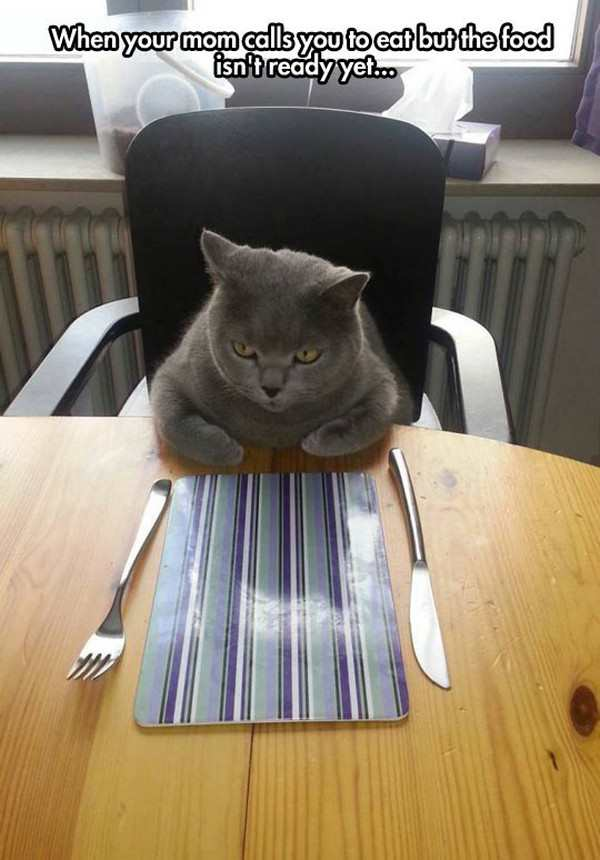 kitty - slow mealtime service.png