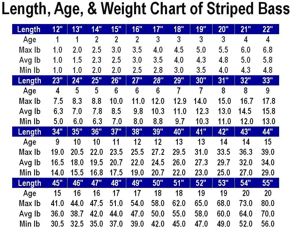 Length, Age, & Weight Chart   STRIPED BASS !   Main Forum   SurfTalk