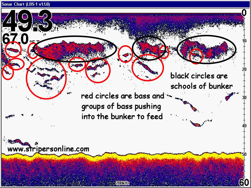 schools-of-bass-and-bunker-on-fish-finder.jpg