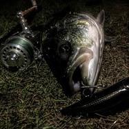 BigTimfish76