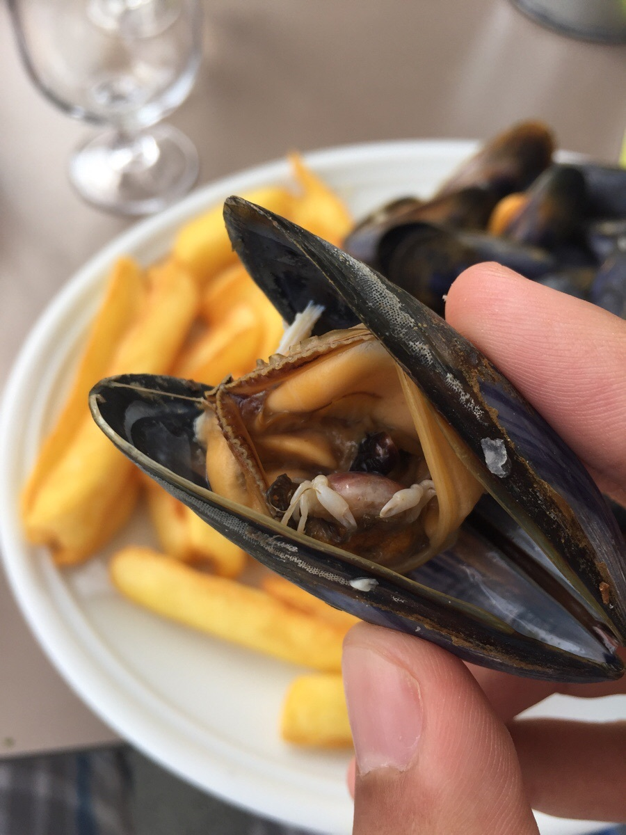 17-My-mussel-contained-a-tiny-half-eaten-crab.jpg