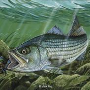 fishon123