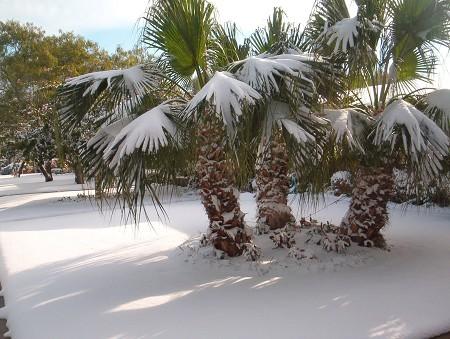 snow in FLA.jpg