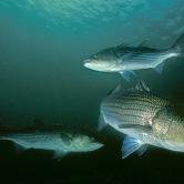 fishinthesurf