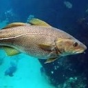 fishingandrew