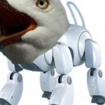 RoboSeagull