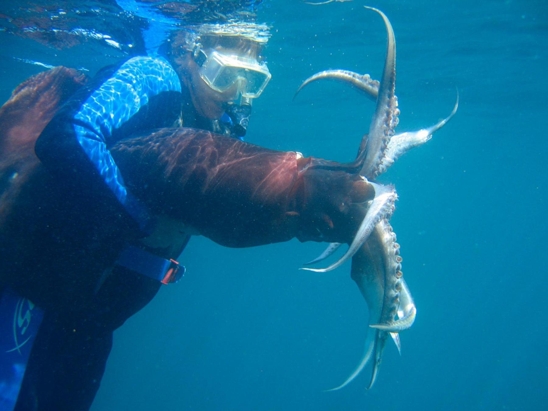 humbolt squid.jpg