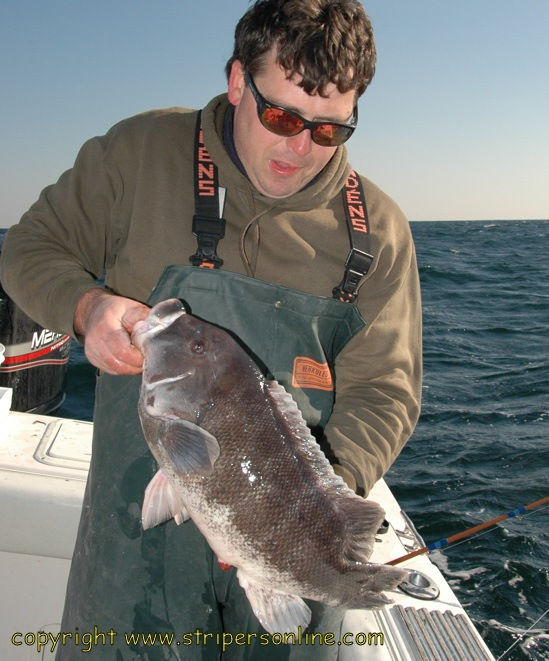 Big Blackfish