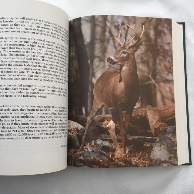 deer book b.jpg - 1.jpg