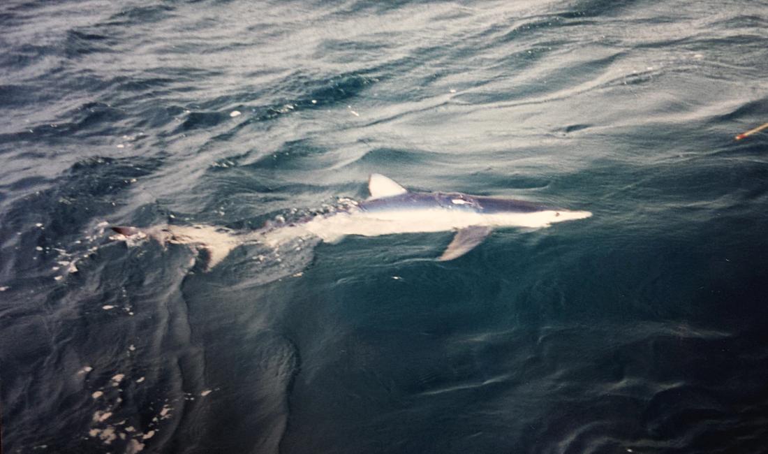 shark1.png.ec35cf914dac22185b0ad719f18d9c88.png