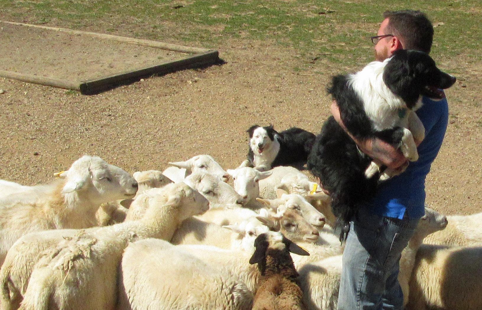 sheep.jpg.057fed0e802c3870713c4dfde955e76c.jpg