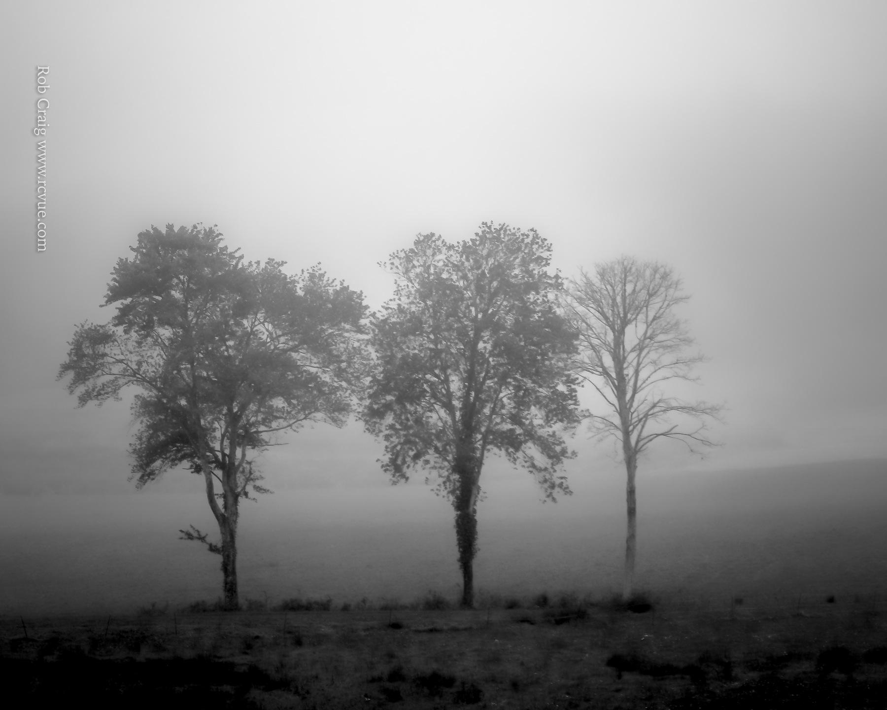 Three Trees 051219.jpg