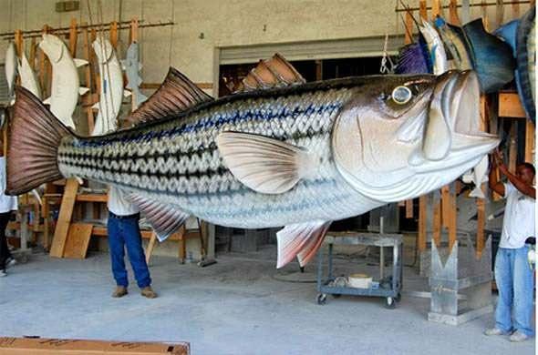16-foot-striped-bass-mount.jpg