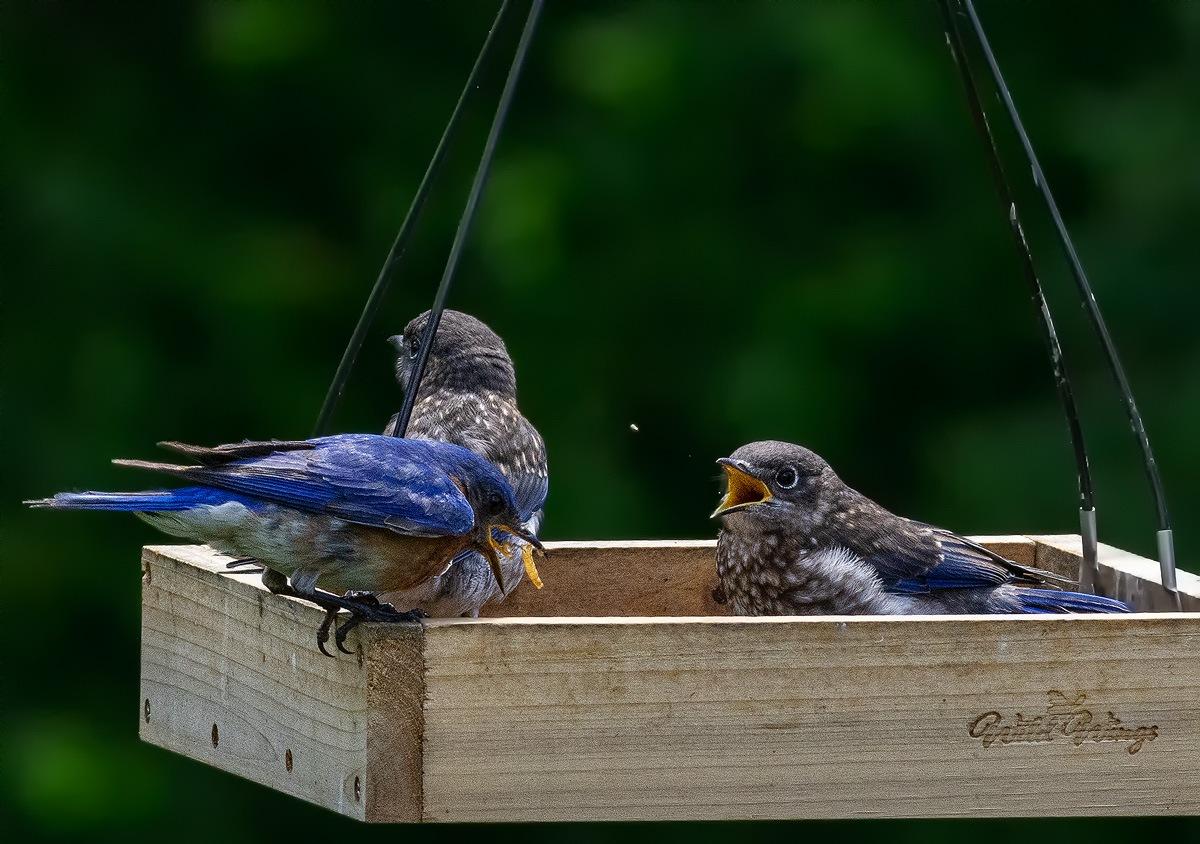 6-14-19 BY Birds_041.jpg