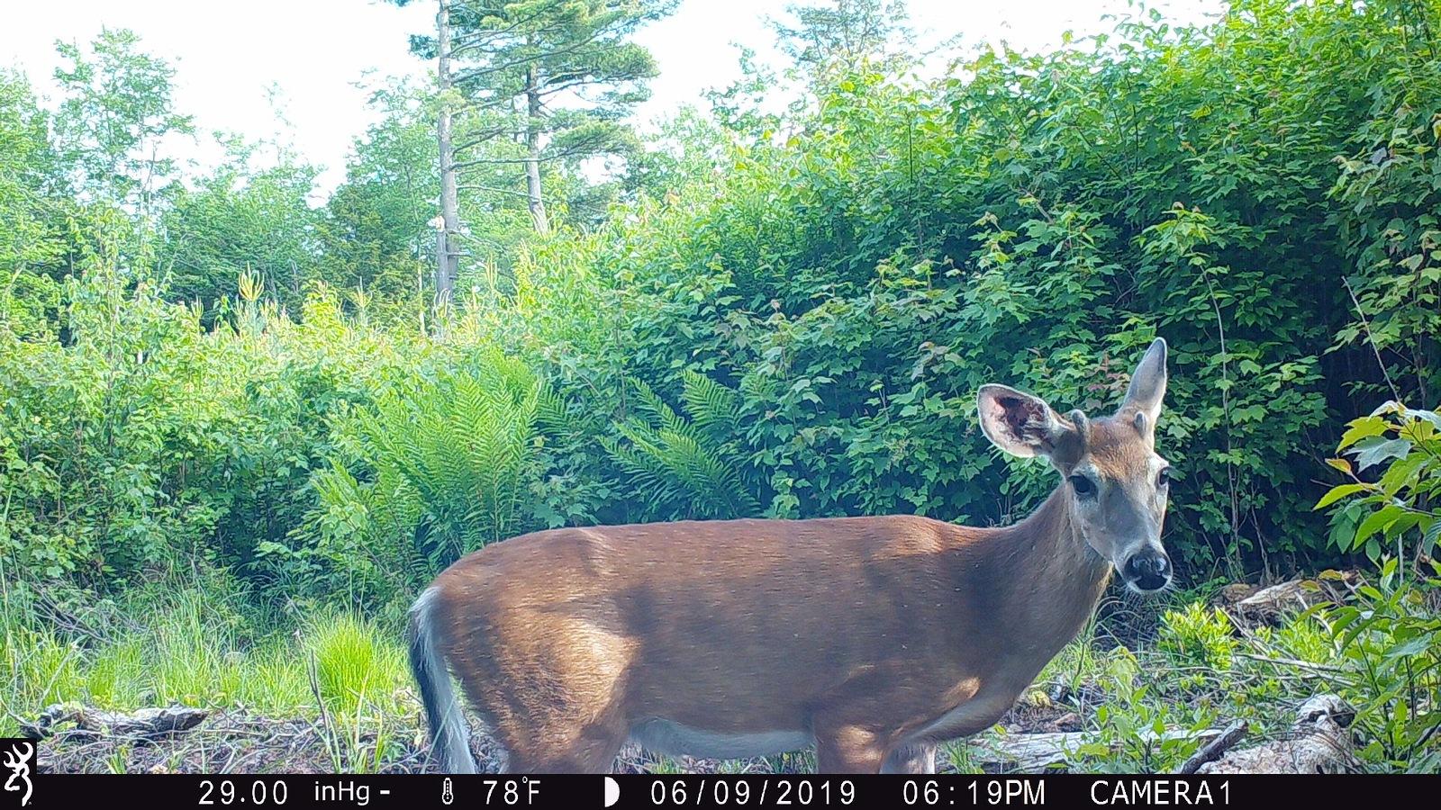 deer1.jpg.51ef6112d07815eba765b241ae6d8053.jpg
