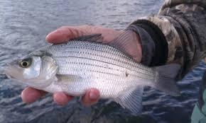 imagesfish.jpg