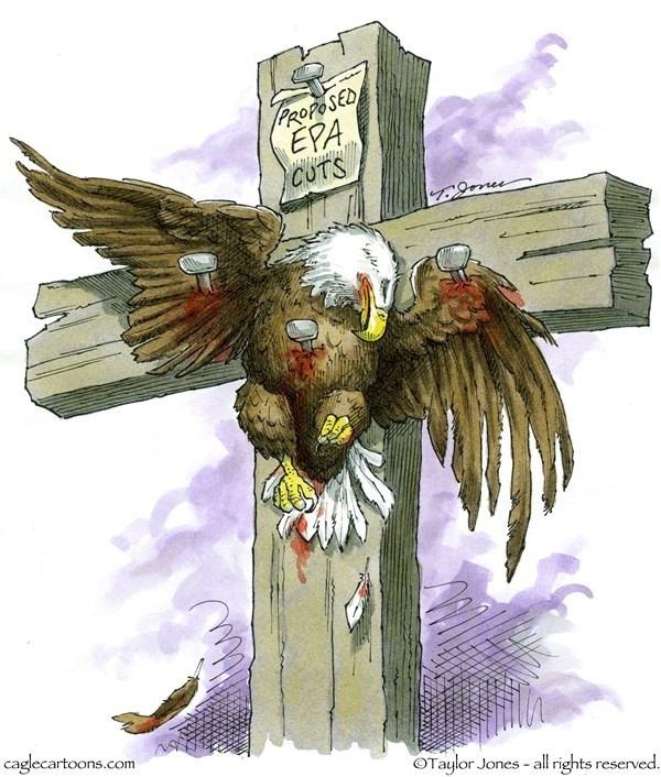 eagle.jpg.7335756474f59dd1802b9d7f710dcd83.jpg
