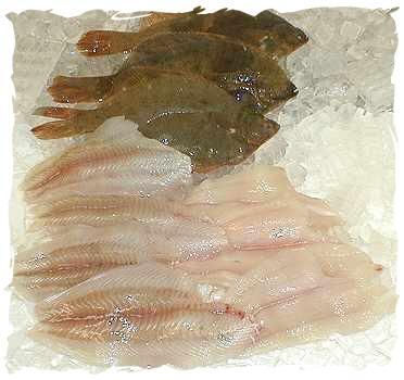 flounderwithfilet55.jpg