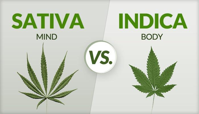 Sativa Mind, Indica Body.jpg