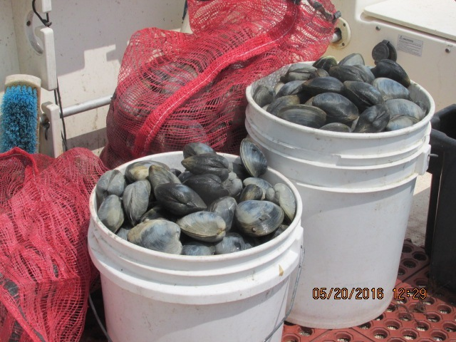 shellfish2.JPG