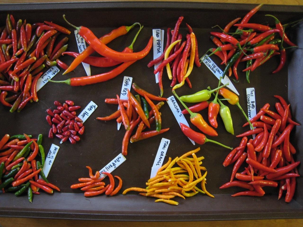 Dried Chilis - 1 (2).jpg