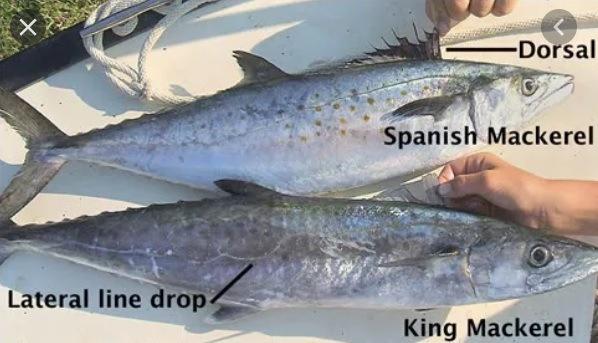 spanish mack vs king mack.jpg